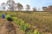 Omasombo's 1/4-acre plot.